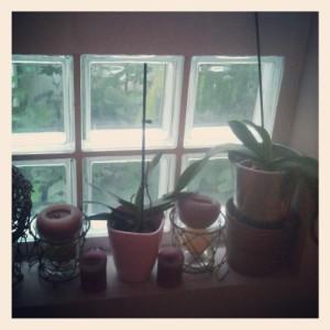Les orchidées aussi se cachent pour mourir...