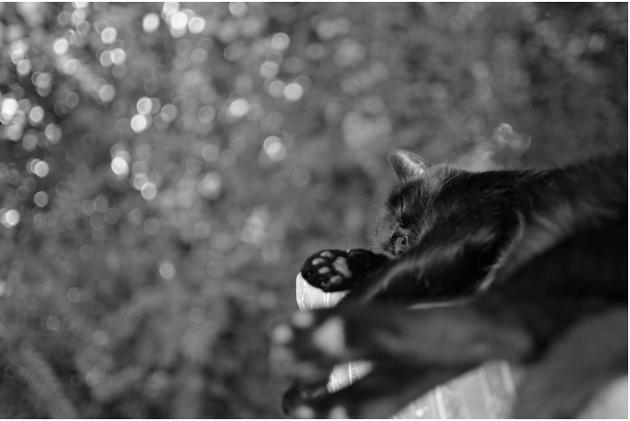 Copyright.Cat sleep Marina Ibarra-Site 500px